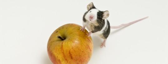 Com activar el botó dret del ratolí a un Mac