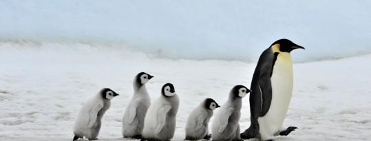 Linux, ¿alguna vez te lo has planteado?